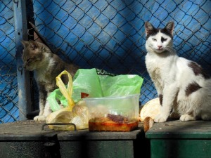 Cats on Dumpster 2