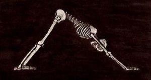 It's all about the bones. Image credit: Adho Mukha Svanasana by Nick Matthaes 2010